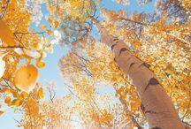 풍경-사진-자연