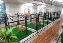 Animal boarding -Animal sanctuary ideas