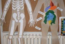 projekt lidské tělo