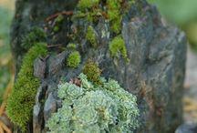 kivi kasveilla