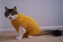 katten trui