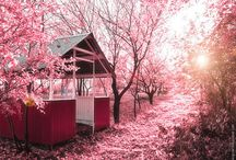 Photography. pink