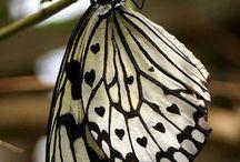 Vlinders / by Bianca Molenaar