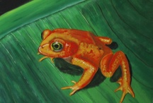 frogs of color / by Nancy Young