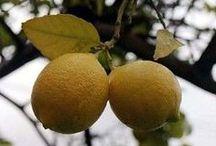 cuidados de limones y otros