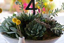 saksı/çiçek/flowers