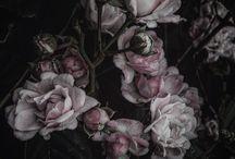Nerea Wintgen photos