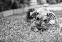 Dogs / Dogs. Cute dogs. Ugly dogs. Mainly dogs... / by Man with a Camera