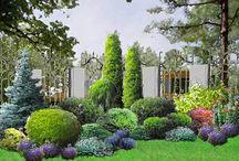 Ogród-zimozielone