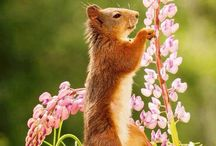 natuurfotografie dieren