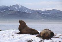 Kamchatka / vk.com/okamchatka Больше о Камчатке здесь!