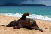 Beachylicious!!