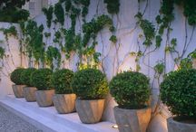 Outdoor Wall Landscaping & Decor
