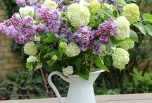 Blumen und Deko / alles, was das Leben schöner macht