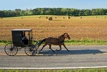 Amish / by Kristin Kaufmann