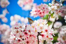 Jardines y Plantas / Aquél que pierde la sensibilidad de asombrarse con la belleza de una #flor, deja morir su alma;)))  ❀❀❀