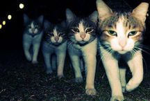 catscatscats / cats! / by Erica Whitters