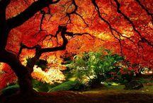 I colori dell'autunno / I colori dell'autunno tra frutti, fiori e tutto quello che l'autunno circonda