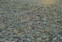 Seashells and Beach Rocks / Treasures from the shore / by Sandra Hazen