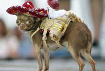 Cute Animals with Sombreros / Cute Animals with Sombreros. Happy Cinco! - Verseo.com / by Verseo Health & Beauty Direct
