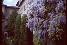 Ravenna (RA), centro storico / #centre #Ravenna #Romagna #Italy