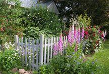 Garden / .