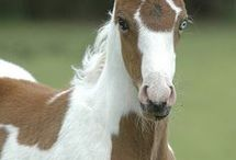 Cool equines and the like