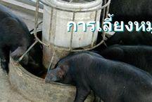 เกษตรอีสาน / รวบรวมเรื่องราวการทำเกษตร การปลูกพืช การเลี้ยงสัตว์ การทำประมง มาเล่าสู่พี่น้องบ้านเฮา