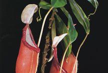 Blaschka lampwork plants