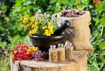 Ekcéma ellen / Számos krém és kenőcs tartalmaz gyulladáscsökkentő növényi anyagokat. Ide tartozik a kamilla, a varázsdió és a körömvirág