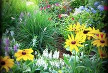 Gardening / by Molly Pratt