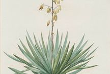 Collection // Plant Illustrations / by Kim Lawler
