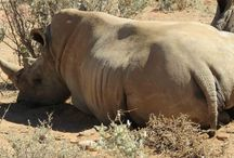 2015 Bundu and Livinia / Latest pictures of these two incredible Rhinos. #RhinoProtect