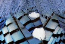 Animals-Birds-Blue Jays / Blue Jays. / by Ellary Branden