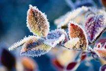 Fall/Winter Love / by Liz Humphrey