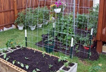 Gardening/Yard / by Maureen Rauchfuss