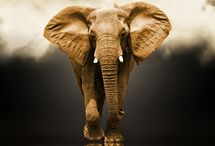Elephants / Best animal ever!