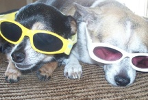 pets...got to love them / by April Moller