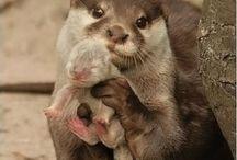 keep otter my way