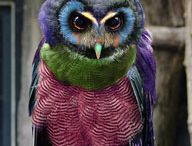Owls / Who knew there were so many varieties.