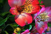 Цветы / Фотографии красивых цветов со всего света