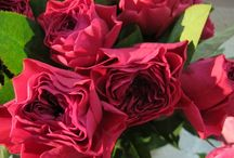 My roses / Roses I can proudly supply for your wedding
