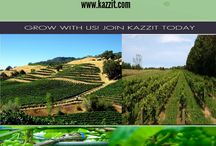 Wineries In North Carolina / North Carolina wineries tend to focus on two distinct grape varieties, muscadine and vinifera grapes.  http://www.kazzit.com/content/north-carolina-wineries.html