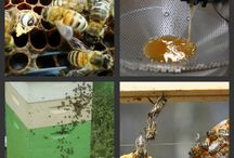 Bee Inspired / Resources for bee keepers!