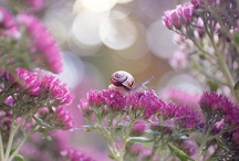 Nature Purple and Pink