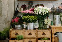 Cafe&Flores