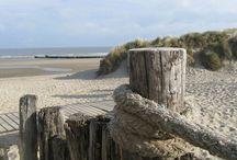 verweerd hout op het strand