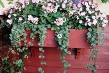 Curb Appeal / by Lynne Vanderveen Smith