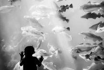 사진-물고기