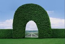 Hedges / by Adriane Stark
